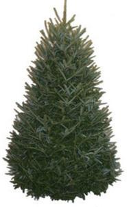 5-ft. to 6-ft. Fresh-Cut Fraser Fir Christmas Tree