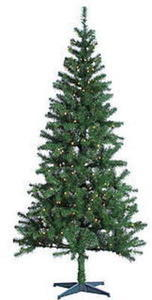 Trimming Traditions 7' Pre-Lit Western Balsam Fir Tree with 250 Clear Lights