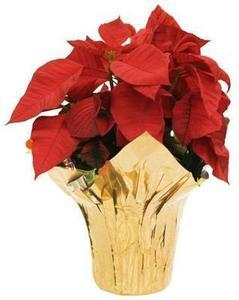 1-Quart Poinsettia (L22289)