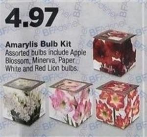 Amarylis Bulb Kit